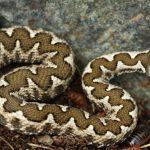 Συμβουλές για το δάγκωμα της οχιάς –Πώς προστατευόμαστε από τα φίδια