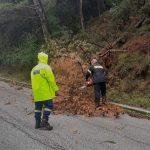 Απομάκρυνση πεσμένου δέντρου